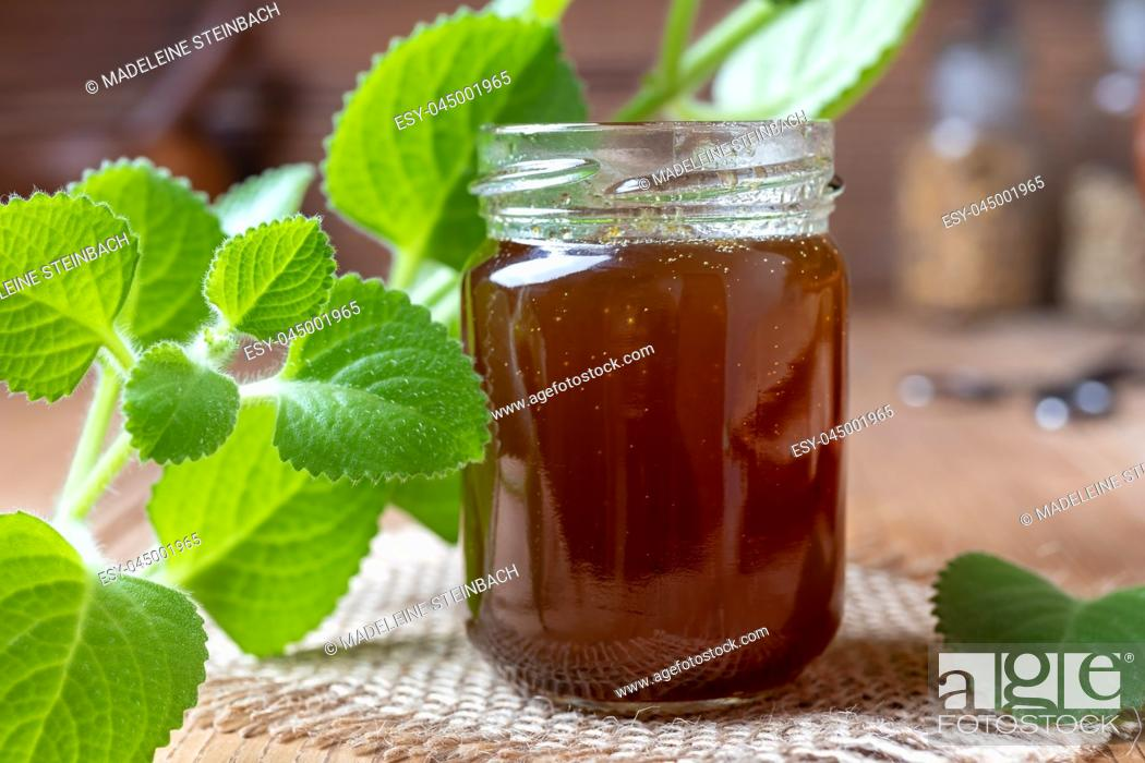 Stock Photo: Silver spurflower syrup against common cold with fresh Plectranthus argentatus plant.