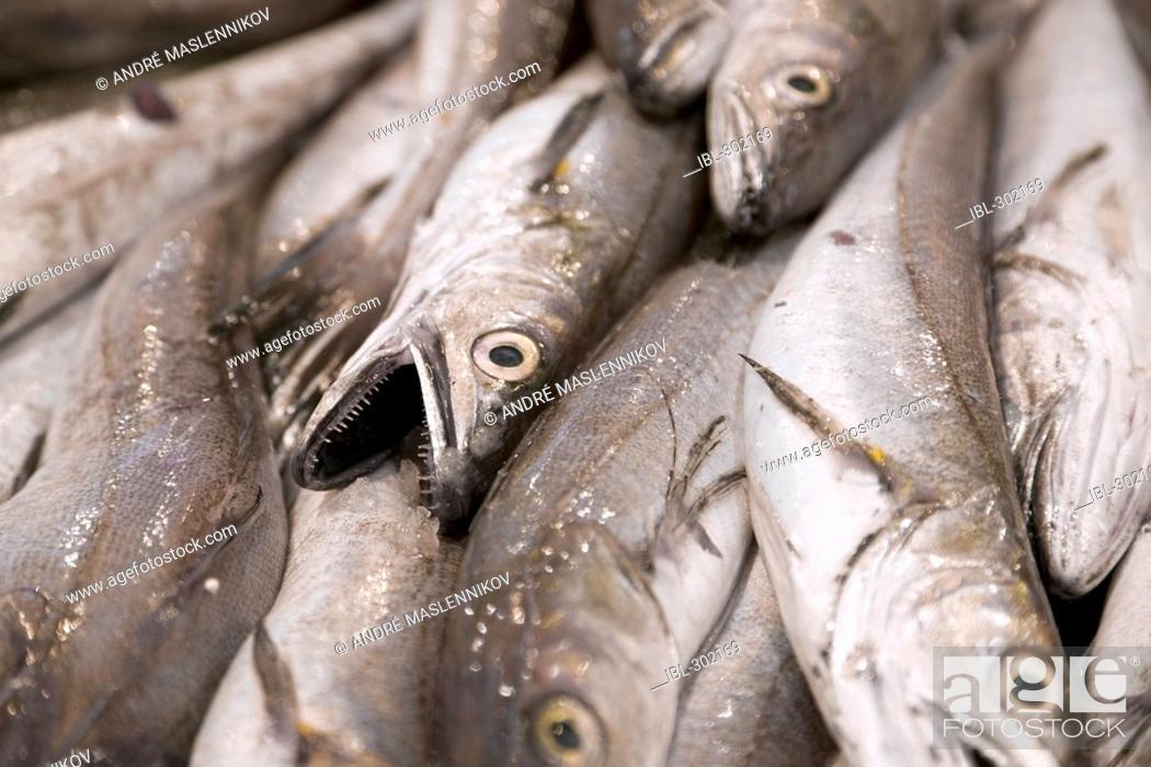 Stock Photo: Fresh fish. Mercat de Santa Catarina.