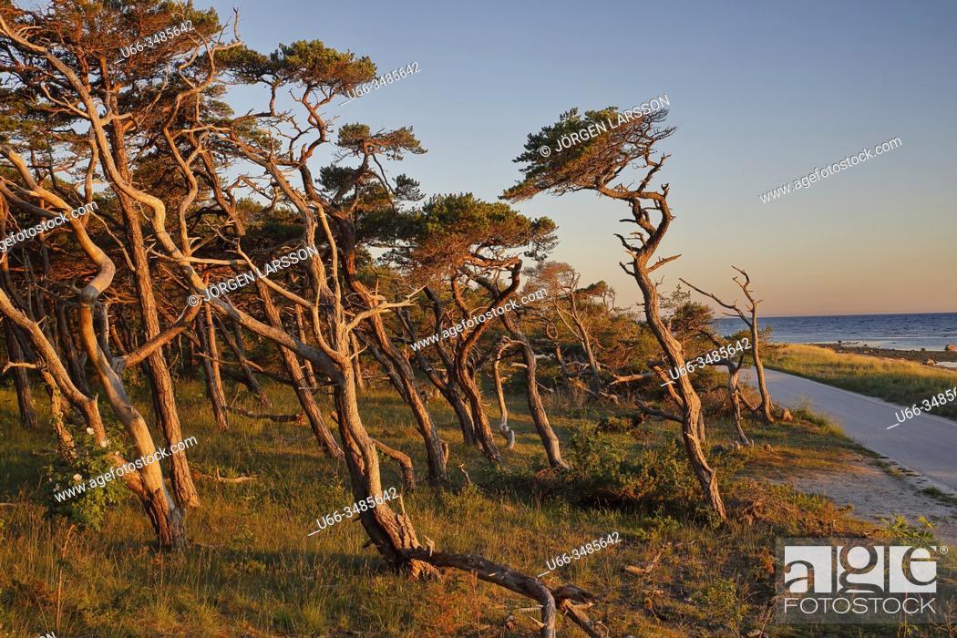 Imagen: Gotland, Sweden.