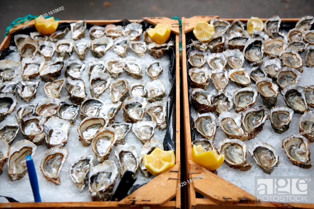 Stock Photo: Oysters, Food Congress, Catering Service, Donostia, San Sebastian, Gipuzkoa, Basque Country, Spain.
