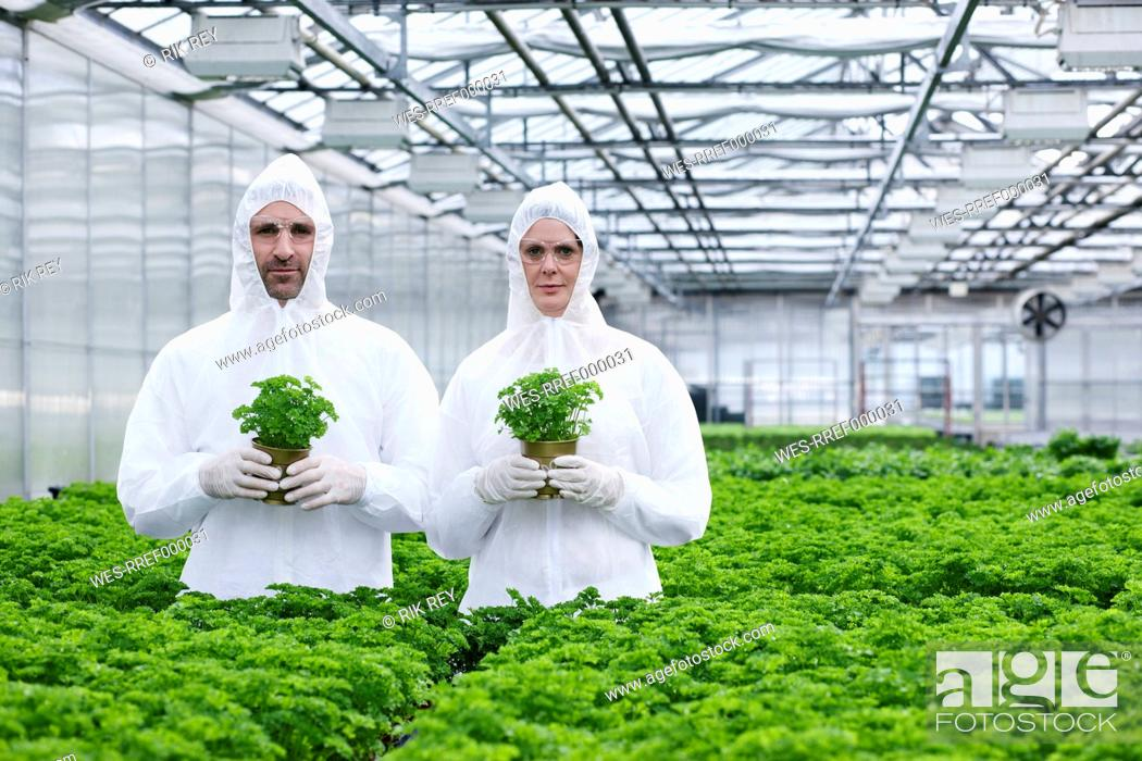 Stock Photo: Germany, Bavaria, Munich, Scientists in greenhouse with parsley plant.
