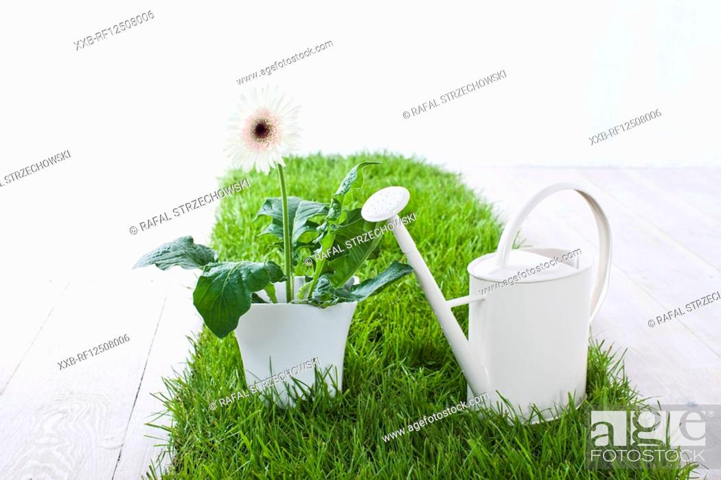 Stock Photo: potted flower and watering can.