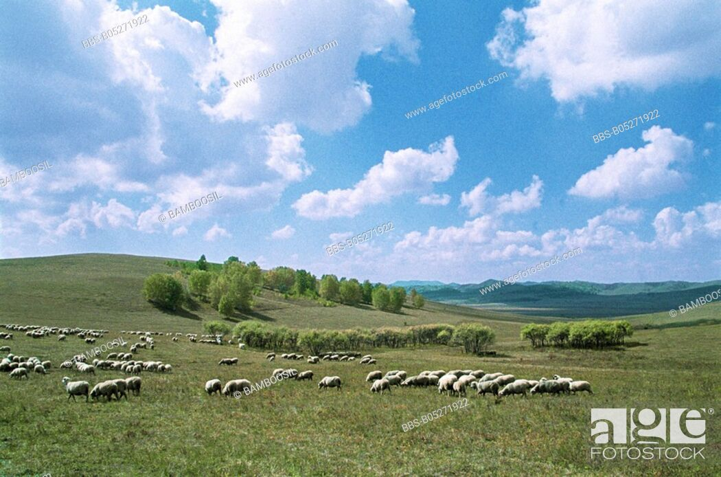 Imagen: Flock of sheep grazing, Mulan, Hebei Province of People's Republic of China.