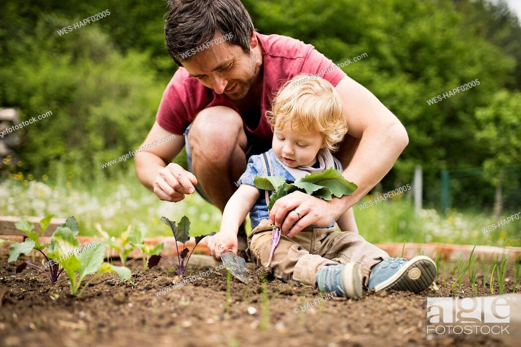 Stock Photo: Father with his little son in the garden planting seedlings.