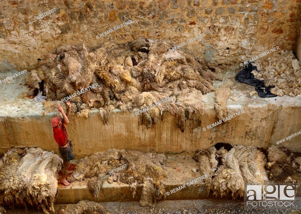Stock Photo: Tannery worker throwing pelts after washing fresh sheep skins in the Fes river after Eid al Adha Morocco.