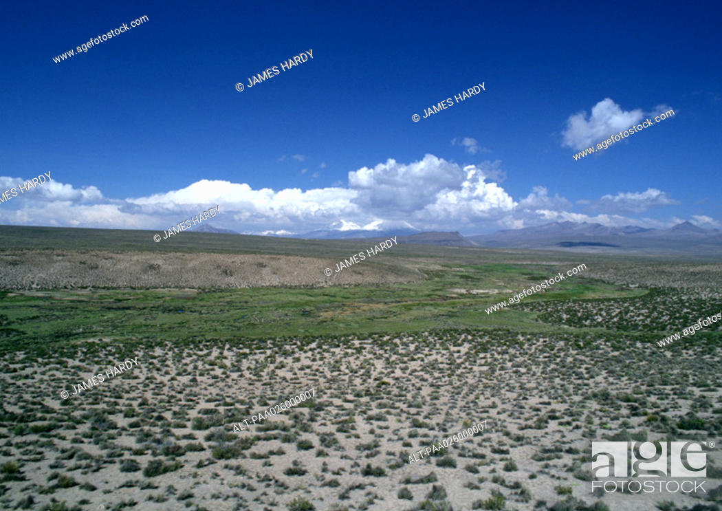 Stock Photo: Chile, El Norte Grande, Altiplano, Lauca National Park, flatland with low grasses, clouds on the horizon.