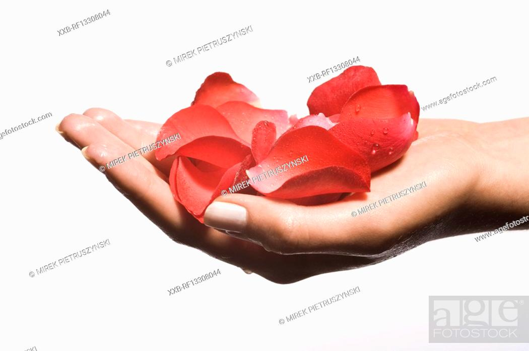 Stock Photo: hand with roses patals.