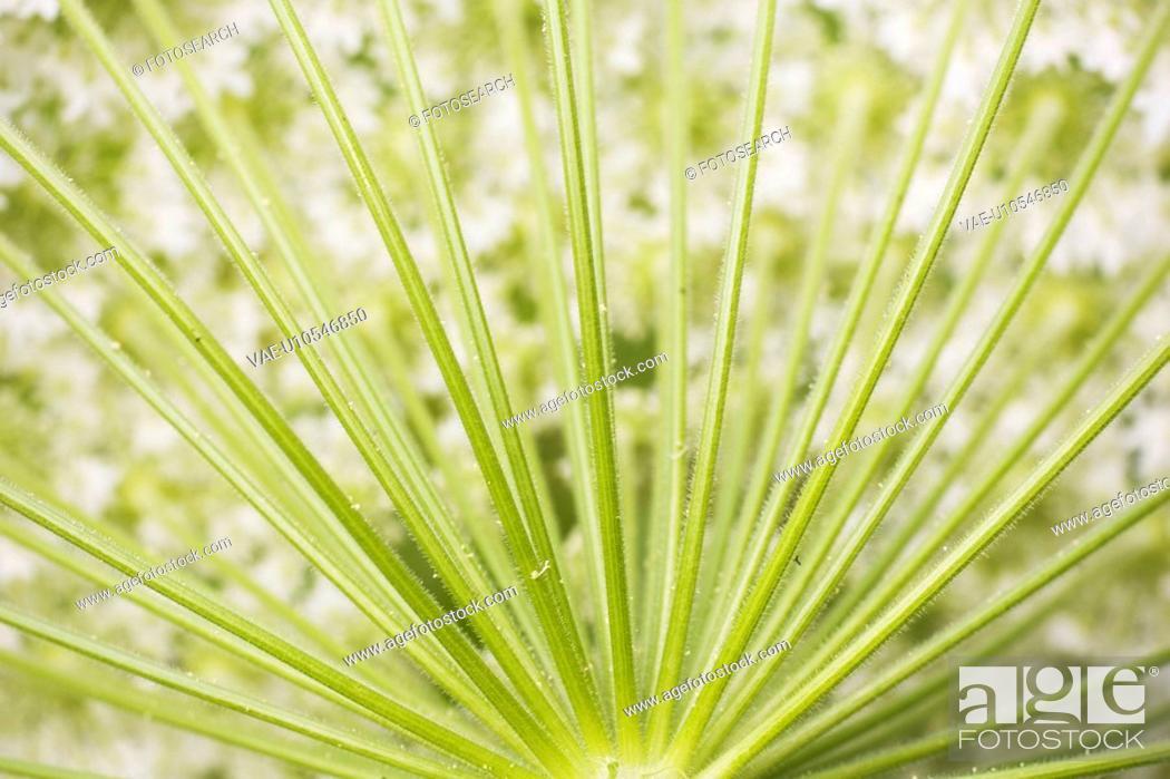 Stock Photo: Botany, Chlorophyll, Close-Up, Day, Design.