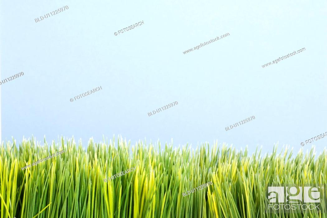 Stock Photo: Strip of artificial green grass against blue background.