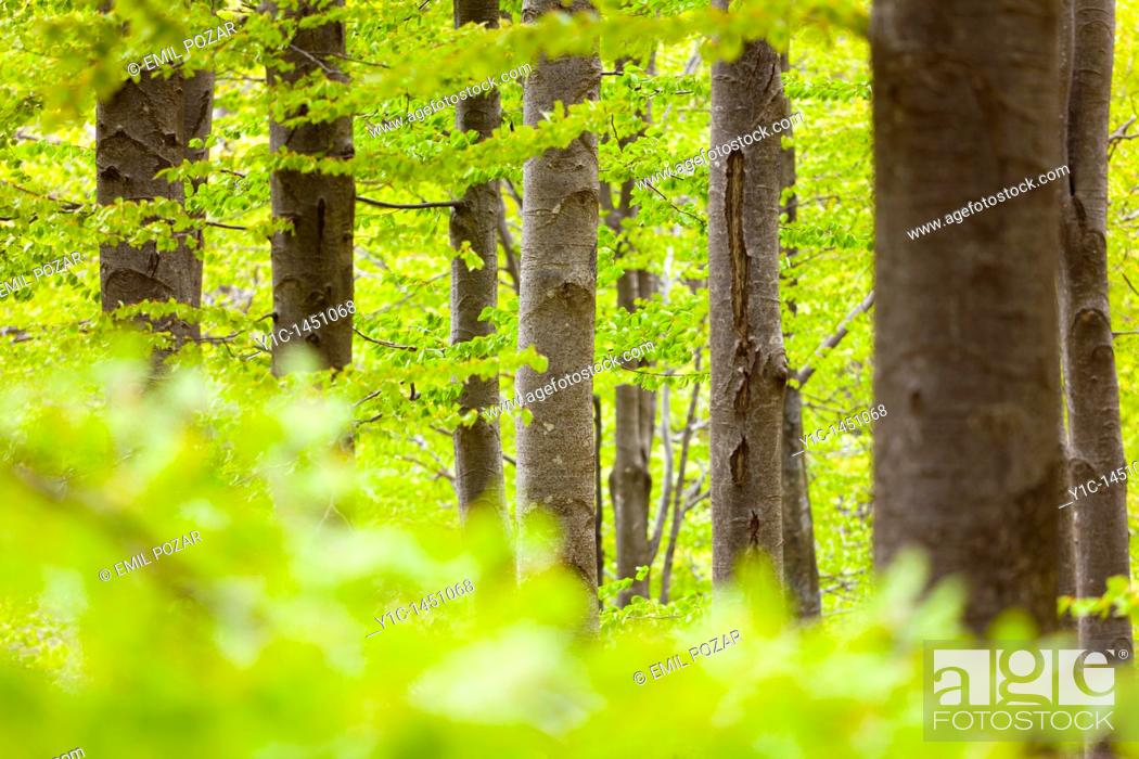 Stock Photo: Dense forest with numerous trees.