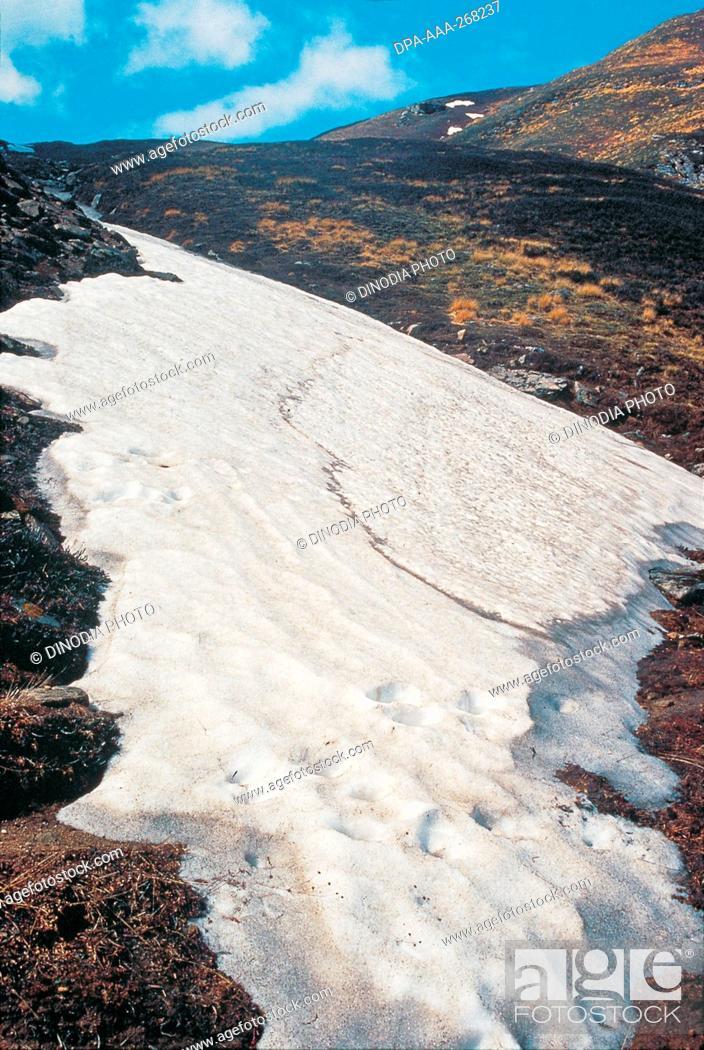 Imagen: Ice Tongue Near Kuari Pass, Garhwal, Uttaranchal, India, Asia.