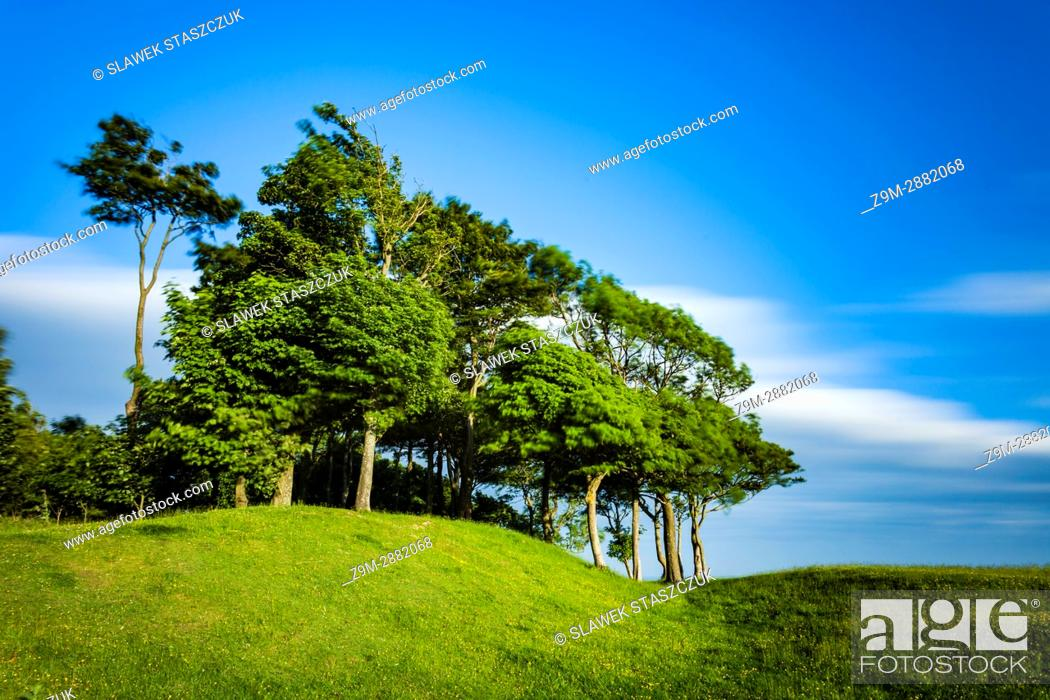 Stock Photo: Windy spring afternoon at Chanctonbury Ring in South Downs National Park, West Sussex, England.