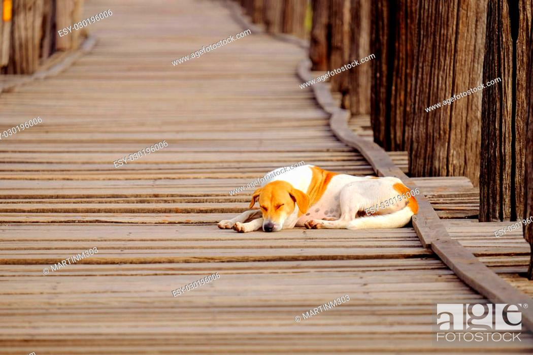 Stock Photo: Moody image of dog sleeping on textured wooden boardwalk, Ubein bridge, Amarapura, Myanmar.