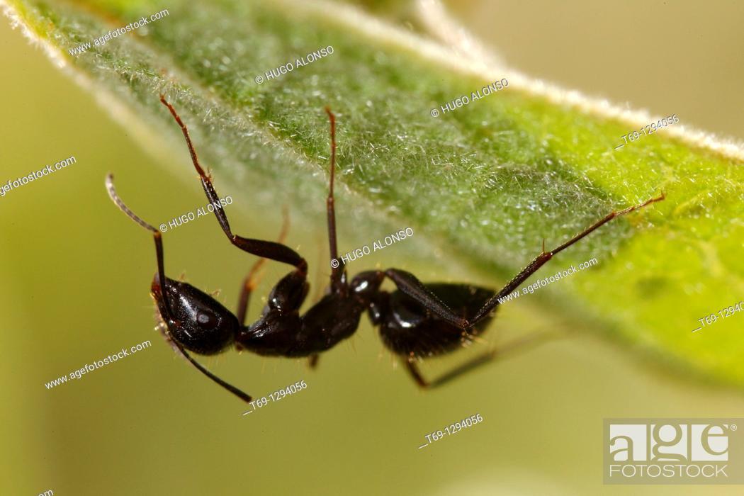 Stock Photo: Ant.