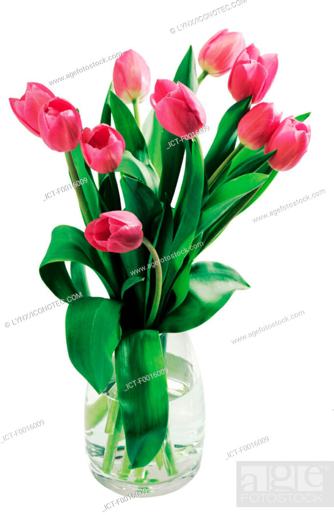 Stock Photo: Bouquet of tulips.