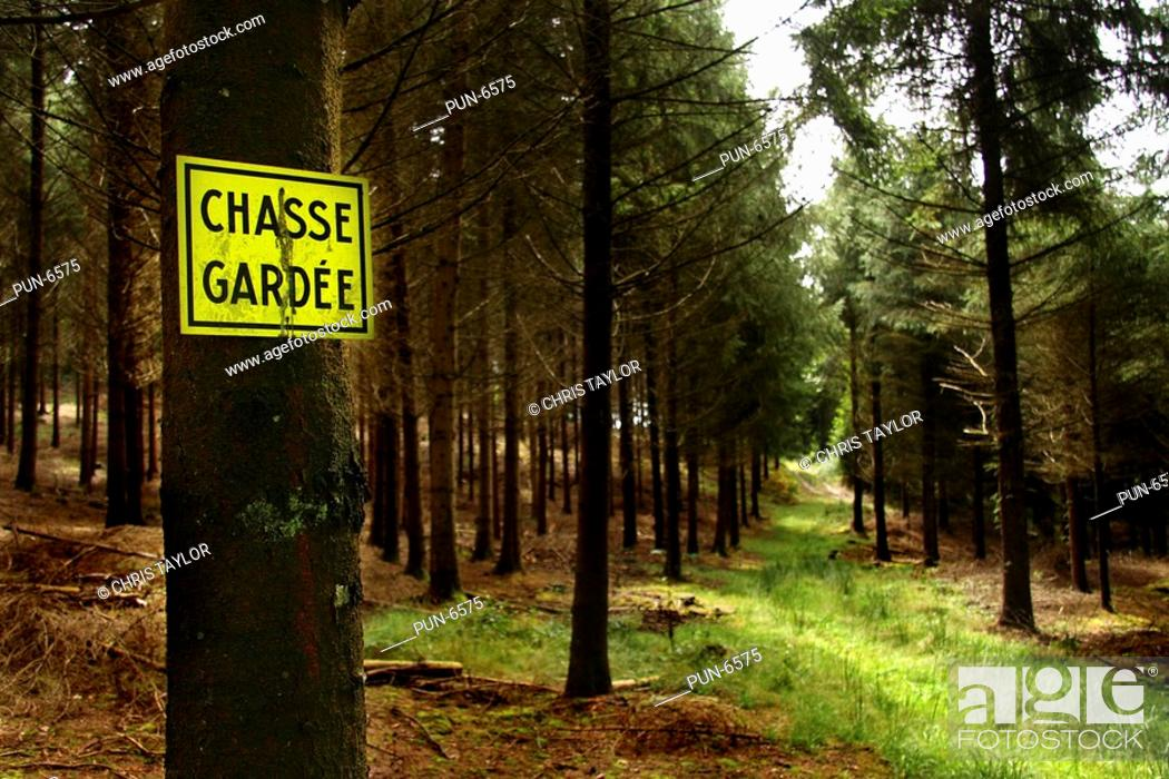 Stock Photo: A chasse gardee sign private hunting nailed to a tree in pine woodland in Limousin.
