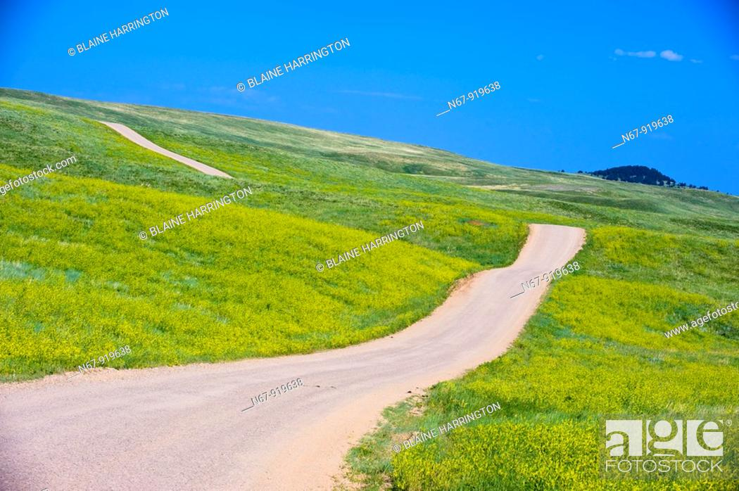 Stock Photo: Fields of sweet clover, Custer State Park, Black Hills, South Dakota USA.