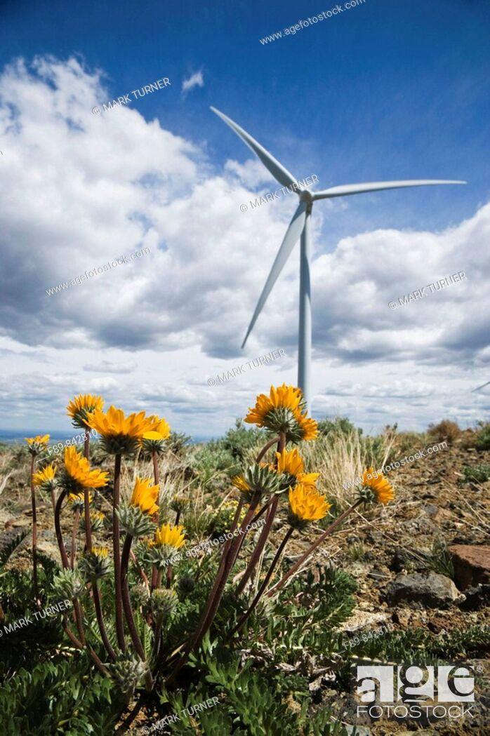 Stock Photo: Wind turbine on ridge with yellow wildflowers.