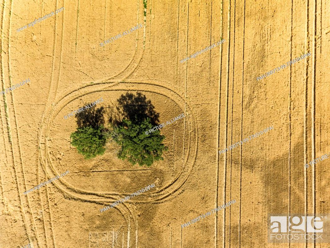 Stock Photo: 13 July 2020, Saxony, Pödelwitz: A farmer has left tracks in a grain field with his vehicles while driving around a group of trees.