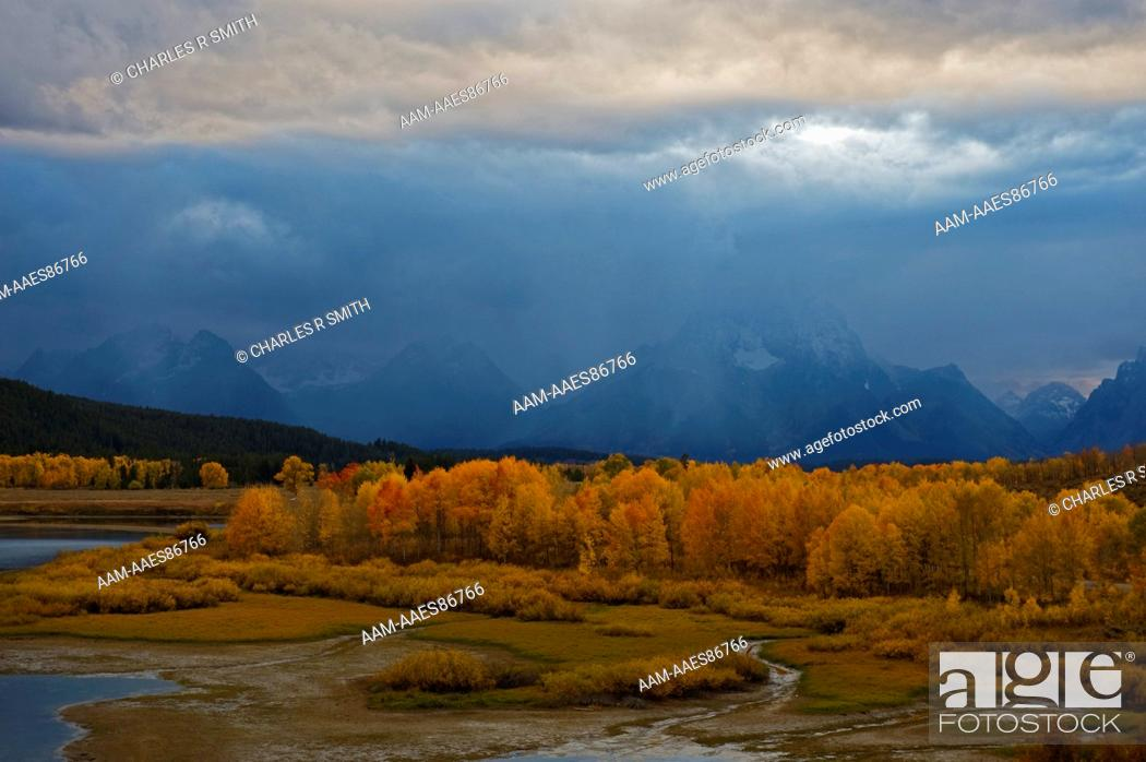Stock Photo: Aspens in fall at Oxbow Bend , Grand Teton National Park, Jackson, WY 20081005.