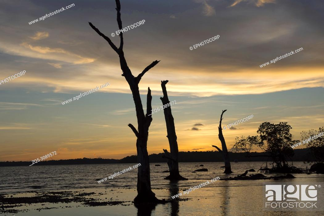 Photo de stock: Silhouette of trees and woods against the setting sun on beach at Chidiya Tapu, Andaman.