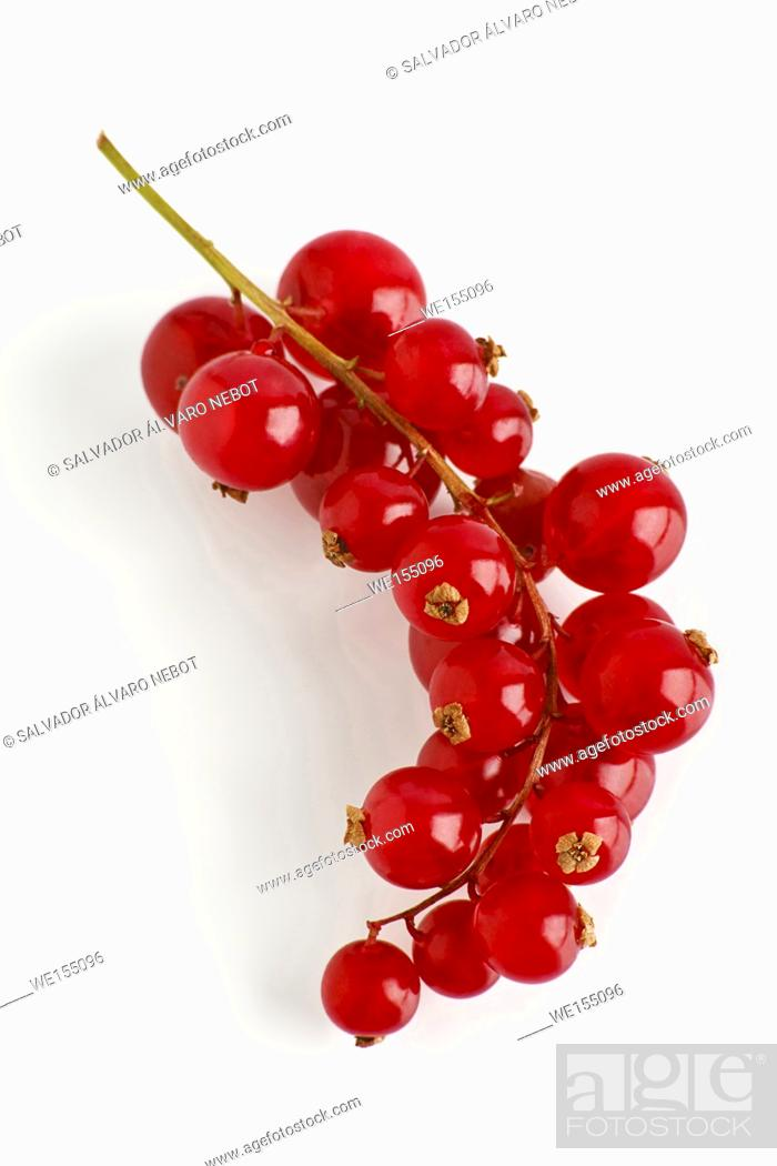 Stock Photo: Cranberry, genus Vaccinium.