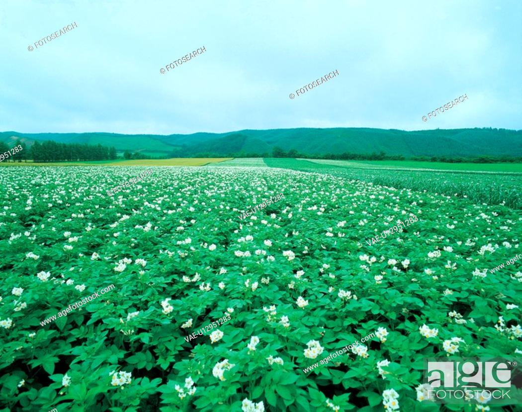 Stock Photo: flowers, field, flower, plants, plant, landscape.