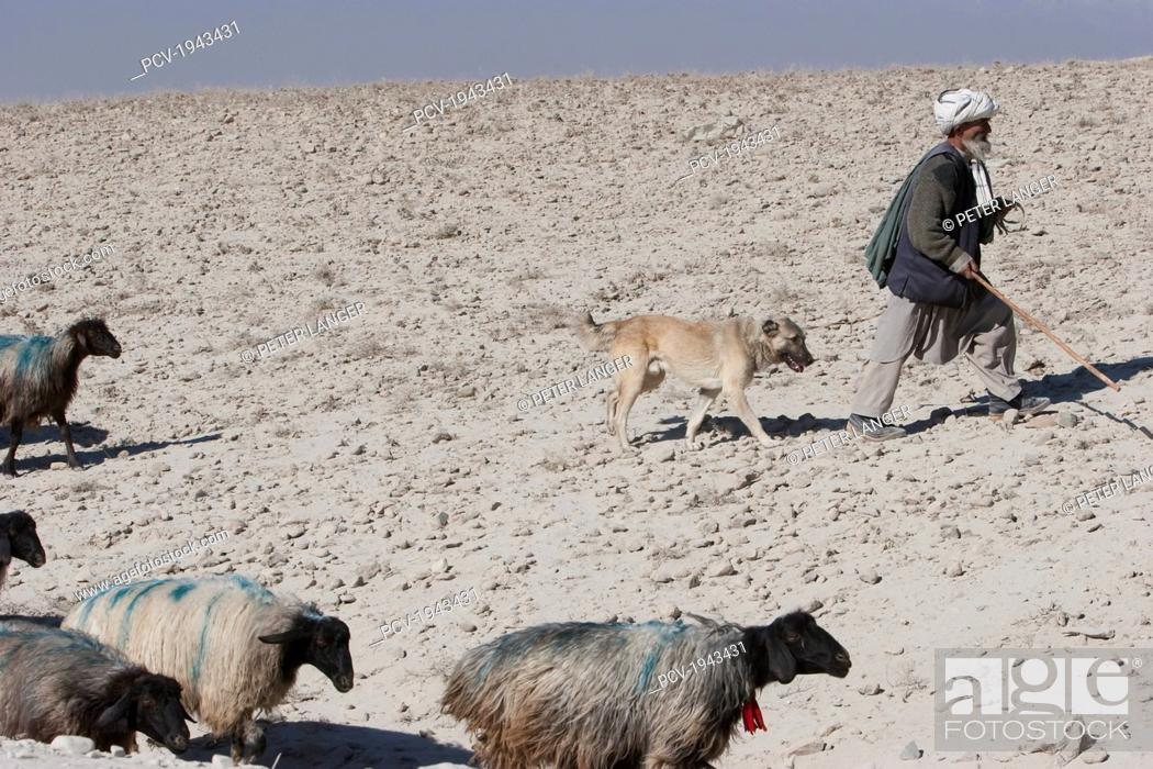 Old Afghan Shepherd With His Dog In The Outskirts Of Kabul