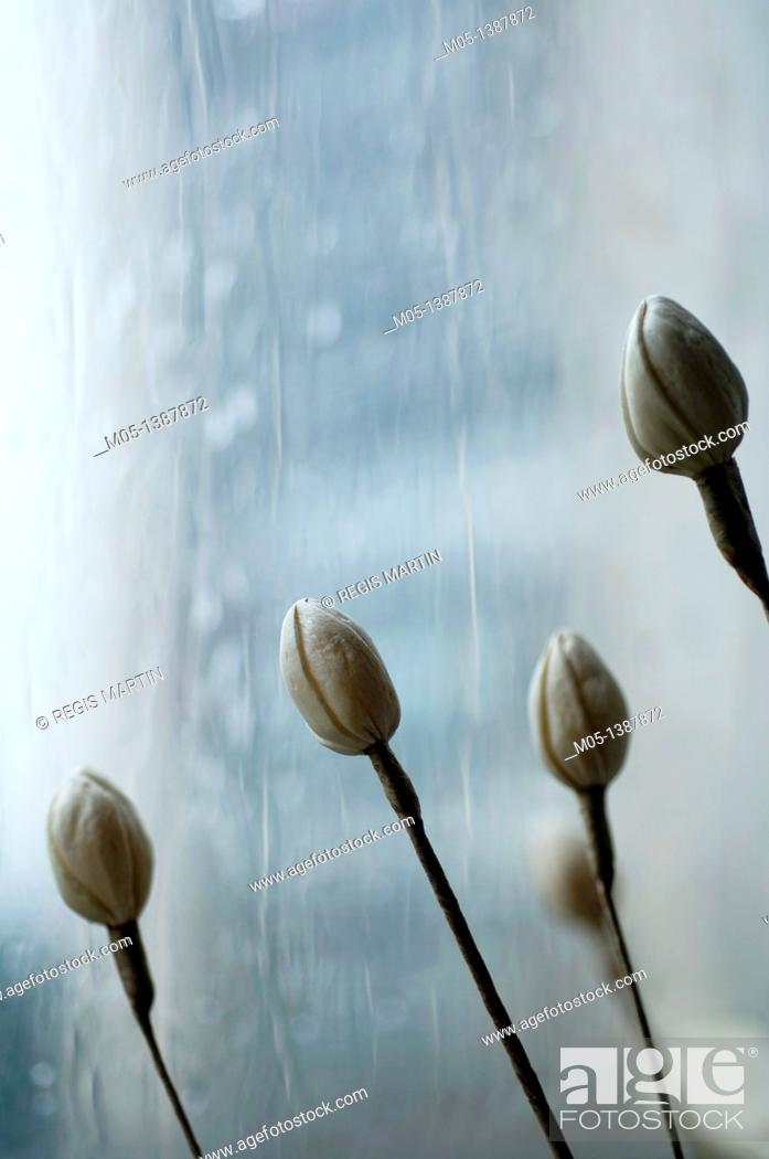 Stock Photo: Fake flowers in front of a rainy window.