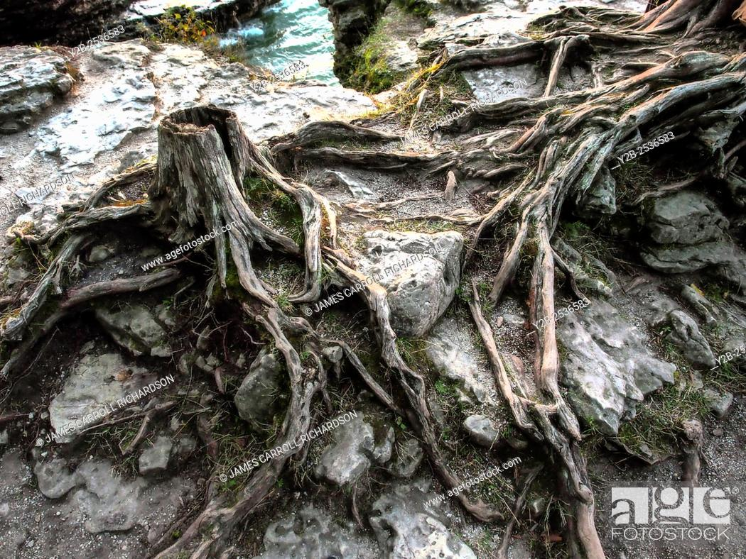 Stock Photo: Root system at Cave Point County Park on Lake Michigan Door County Wisconsin.