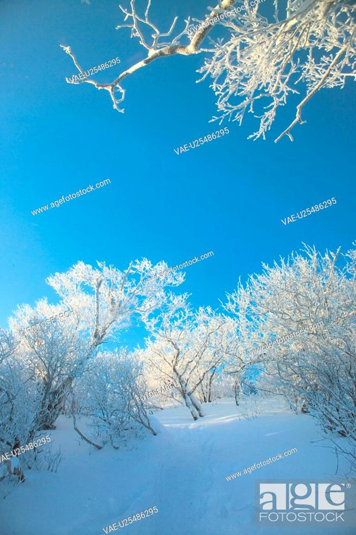 Stock Photo: scenery, snow, landscape, winter, mountain, scene, tree.