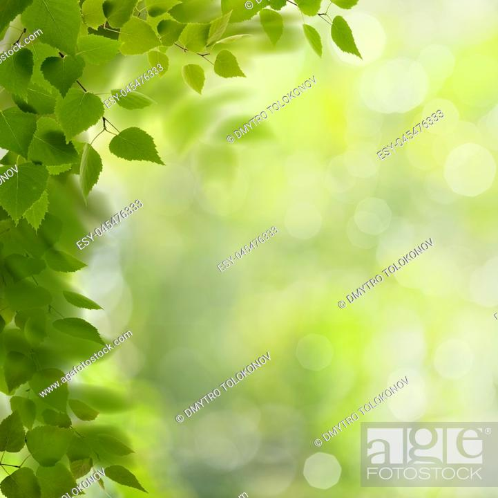 Stock Photo: Summer morning. Abstract environmental backgrounds with green foliage and bokeh.