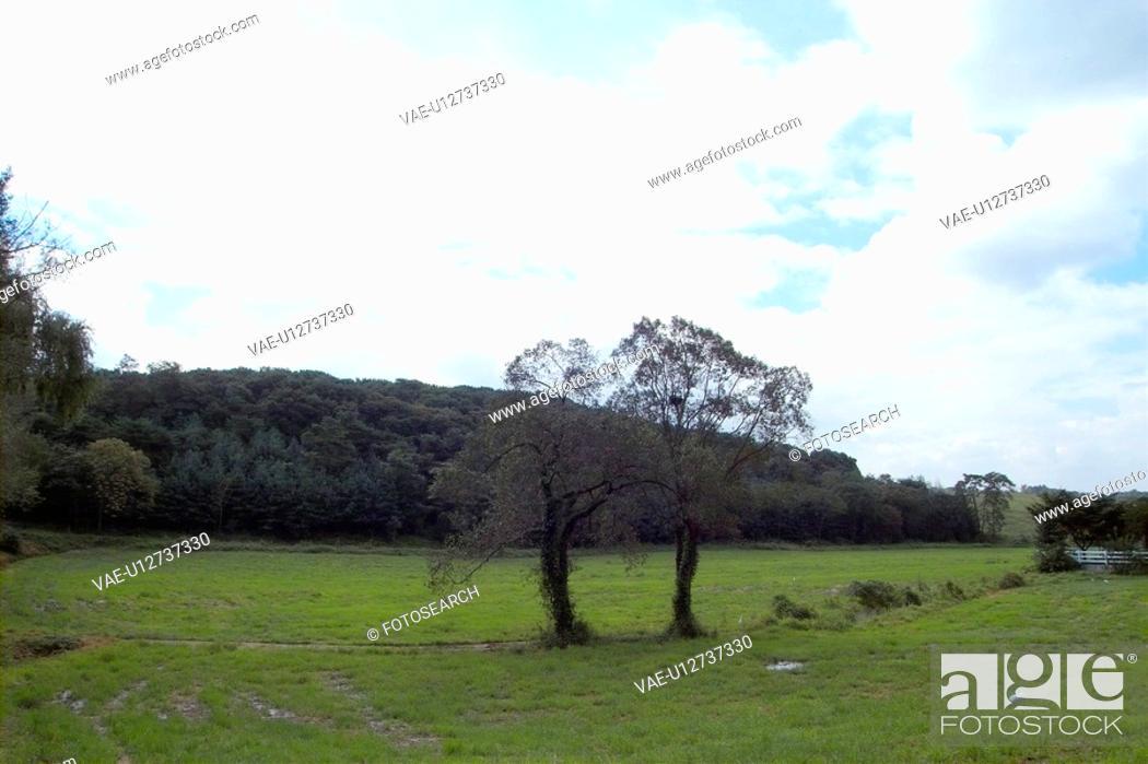 Stock Photo: field, tree, sky, landscape, scenery, nature.