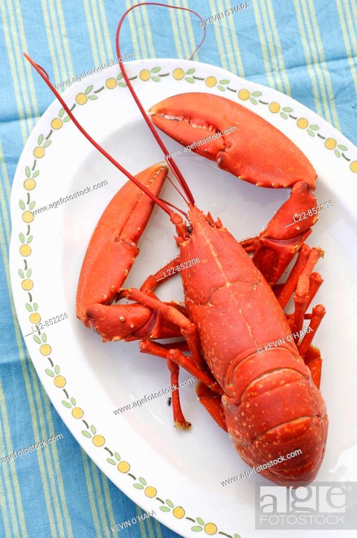 Stock Photo: Lobster, Île de Ré, Atlantic Coast. Charente-Maritime, Poitou-Charentes, France.