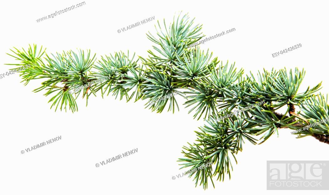 Stock Photo: Christmas decoration isolated on white.
