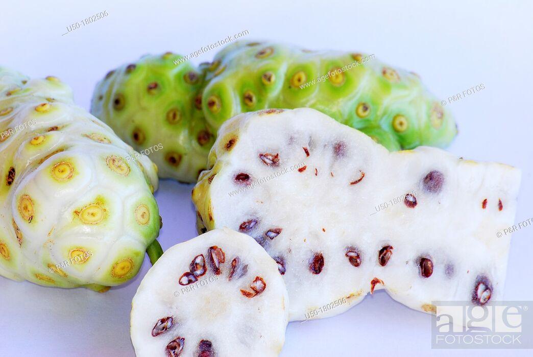 Stock Photo: Fruits of noni, Morinda citrifolia, Rubiaceae  2012.