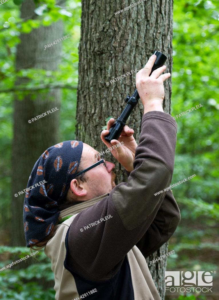 Stock Photo: Cone picker Stefan Teschke looks through a telescope into a Small-leaved Lime (lat: Tilia cordata) in the city forest in Prenzlau, Germany, 23 September 2013.