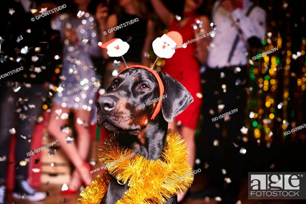 Stock Photo: Portrait of dog at party wearing santa deely boppers, group of people dancing in background.