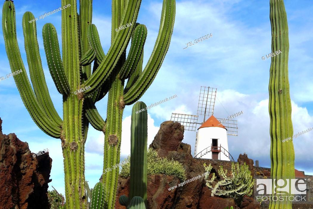 Stock Photo: Cactus garden, jardin de los cactus. Guatiza, Lanzarote. Canary Islands. Spain.