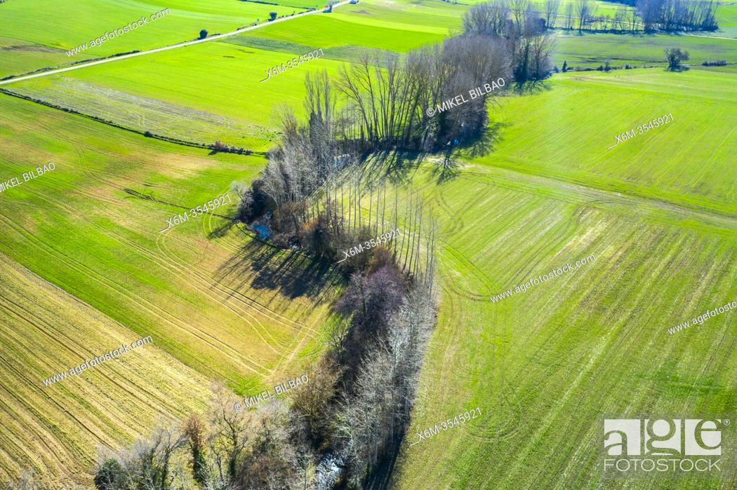 Imagen: Cereal farm in a plain and riverbed with poplar trees. Santa Cruz de Campezo area. Alava, Basque Country, Spain, Europe.
