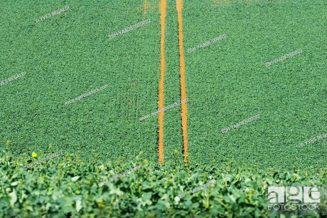 Stock Photo: Tire tracks in cultivated field, high angle view.