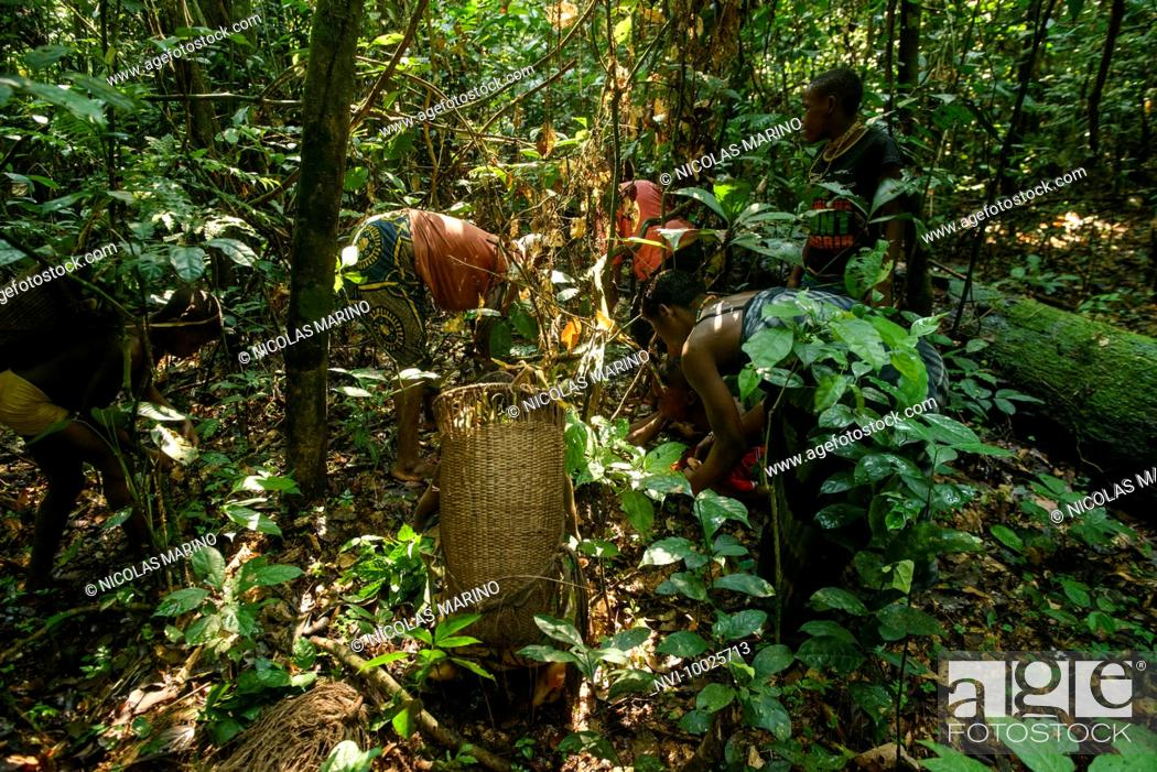 Life Of Bayaka Pygmies In The Equatorial Rainforest Central