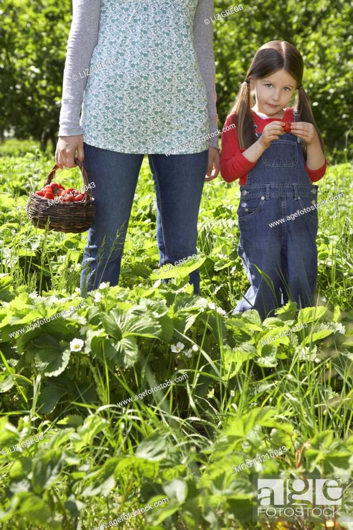 Stock Photo: Girl 5-6 with mother mid section in strawberry field.