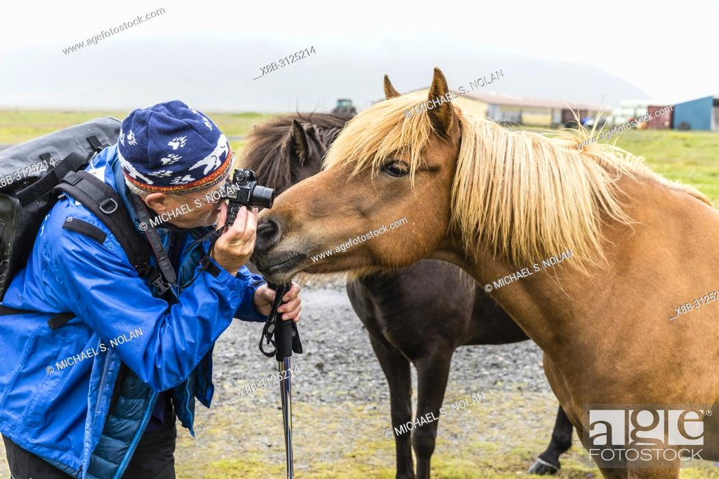 Stock Photo: Photographer with Icelandic horses on a farm on the southeast coast of Iceland.