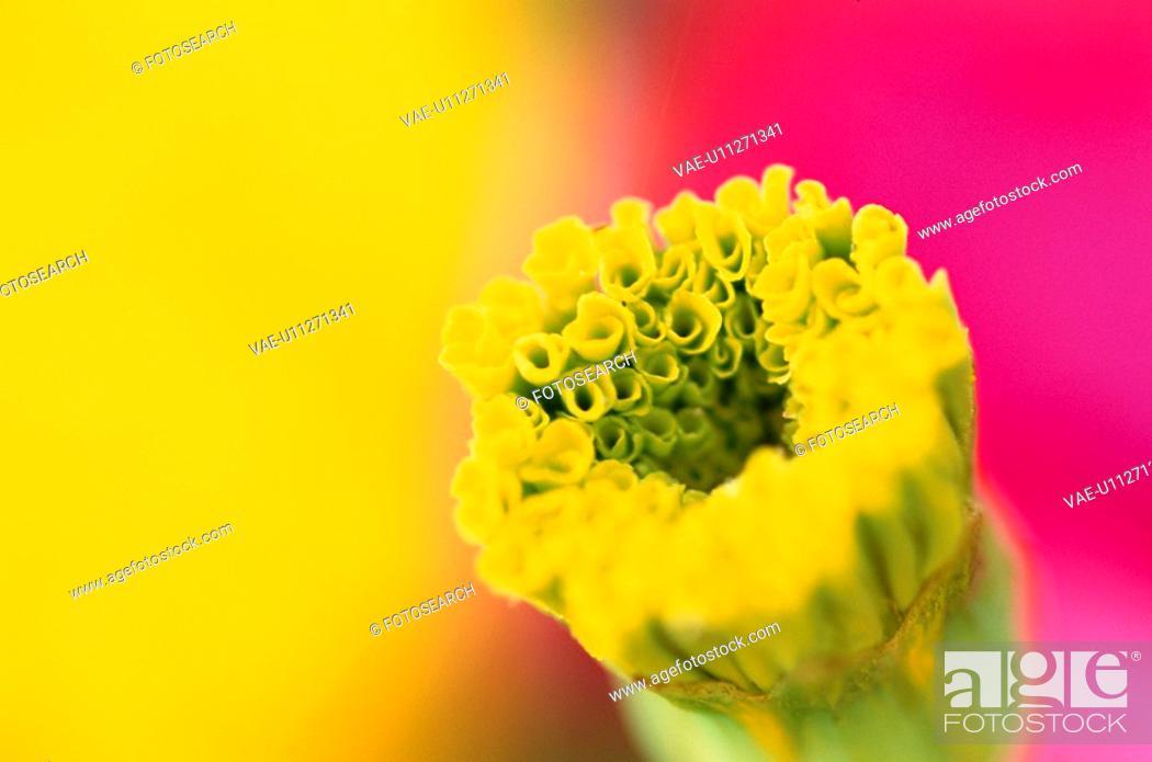 Stock Photo: Stamens Of Yellow Flower.