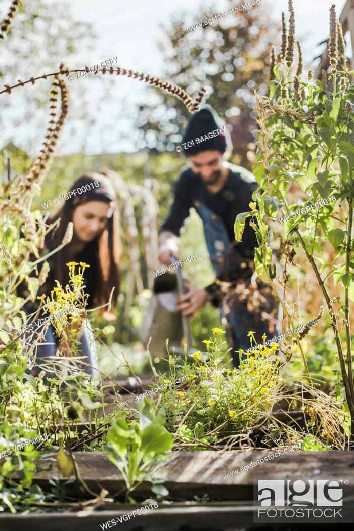 Imagen: Couple gardening in urban garden together.
