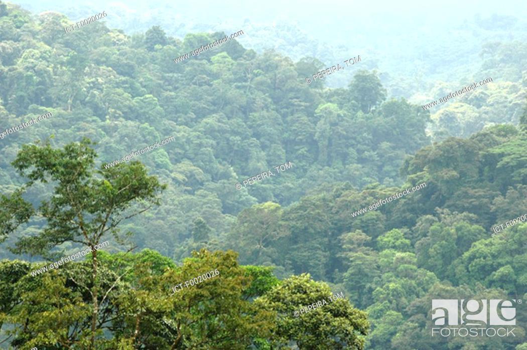 Stock Photo: Costa Rica, the rainforest.