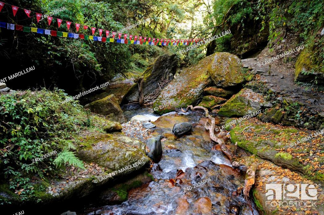 Stock Photo: Watercourse between Ulleri and Ghorepani Village. Kaski District, Gandaki Zone, Annapurna Conservation Area, Western Region Pashchimanchal, Nepal.