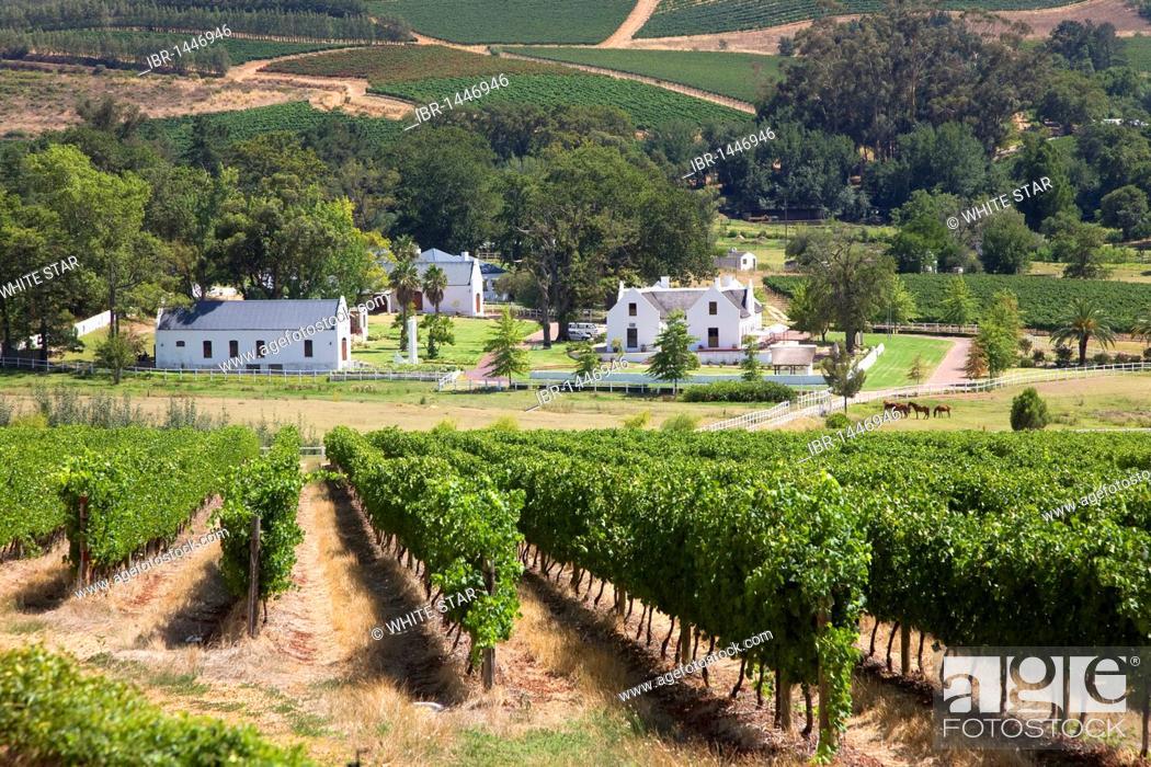 Imagen: Vineyard Zorgvliet, landscape of the winelands, wineries, vineyards, Stellenbosch, Winelands, Western Cape, South Africa, Africa.