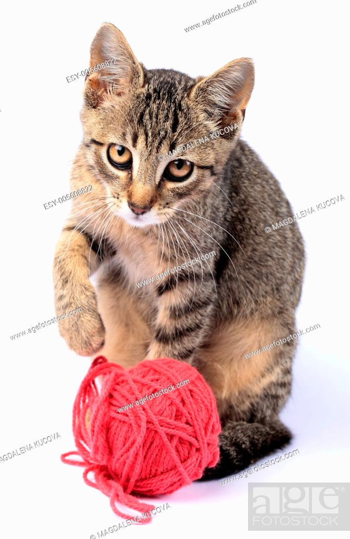 Stock Photo: Little cat playing with wool on white background.